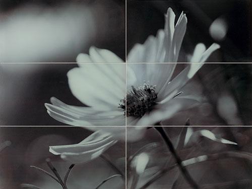 Joy flower